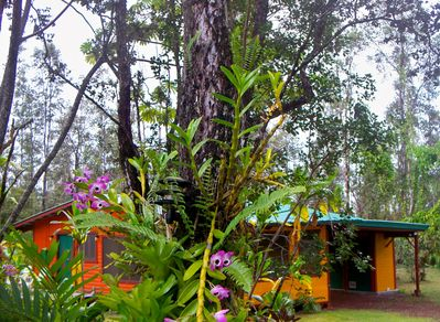 The Rainforest Hideaway hidden behind the trees and orchids
