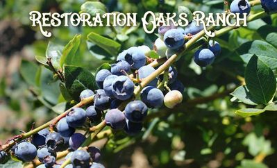 Seasonal Blueberry Farm - U-Pick (May through September)