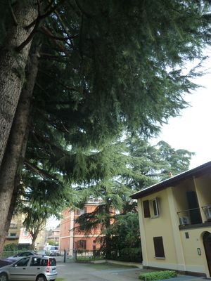 Photo for The Room onto Cedar Trees, Studio apt., private Parking space_Airport+CityCenter