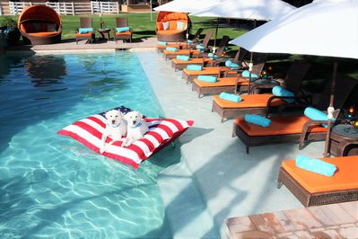 Pet Friendly Oasis awaits you and your Guests! Shallow pool edge- great for ki