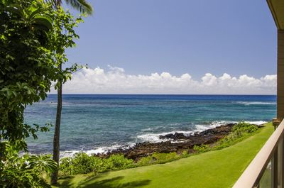 Watch the Turtles for Your Private Lanai