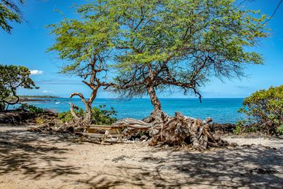 Paniau beach park, the best diving and snorkeling on the island, 2 blocks away