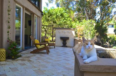 """Patio & """"Whiskers"""". Note: we love pets but do not allow them in the apartment."""