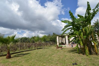 View of the vines