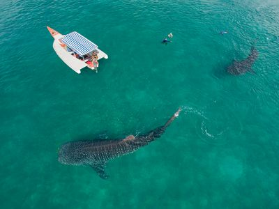 Photo for Dream,Explore,Discover mafia island home to whalesharks
