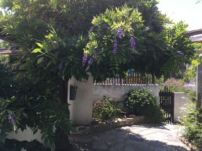 View of the approach from the street, with the wisteria in bloom