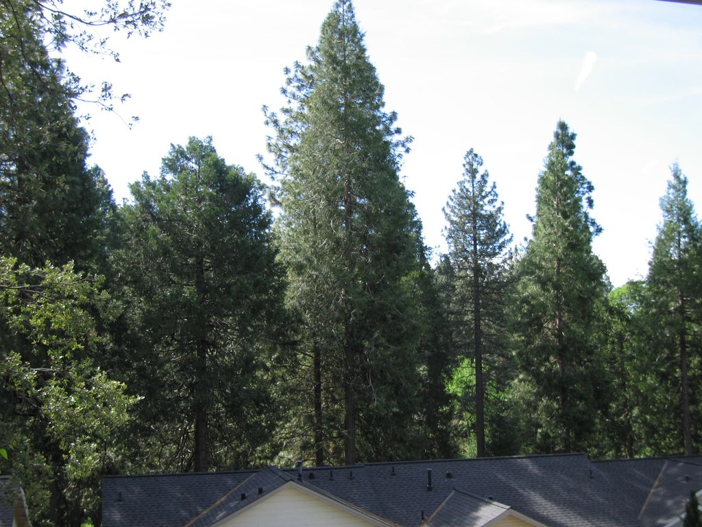 hathaway pines Hathaway pines populated place profile with maps, aerial photos, schools, hospitals, airports, real estate mls listings and local jobs location: calaveras county, ca, fid: 1658721.