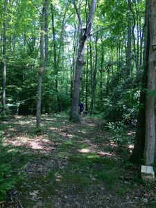 Hiking trail from the cabin  - leads to Wolf Creek & Trails to Long Point (3mi