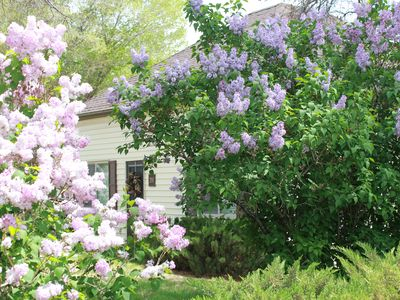 Photo for Lilac Cottage - A Bluebird Cottage Listing!