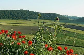 Photo for Lovely flat and garden in the Beautiful Bracciano lake distrikt  North Of Rome