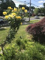 Photo for 2BR House Vacation Rental in Dumont, New Jersey