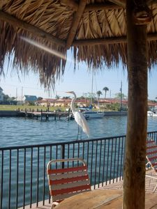 Photo for So Much Fun in Sun at this Awesome Waterfront Resort on the Gulf of Mexico!