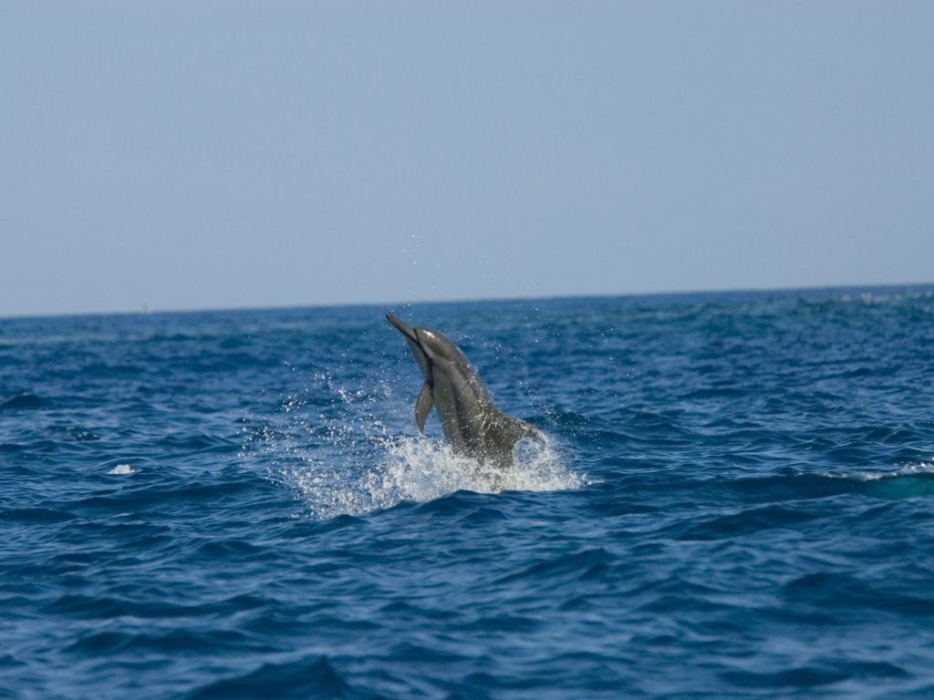 Swim With Wild Dolphins In Captain Cook On Homeaway