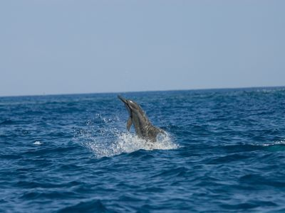 Photo for Swim With Wild Dolphins In Captain Cook On The South Kona Coast In Hawaii!