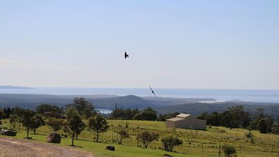 View to Lake Conjola and the Pacific Ocean, with sea eagles soaring above