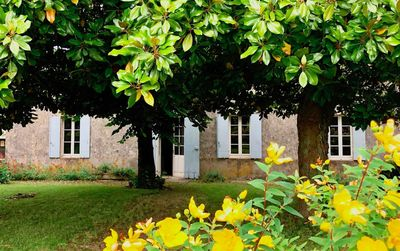 Photo for Maison de Magnolia - a charming French cottage close to Saint Emilion