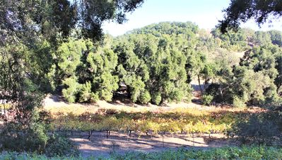 Photo for Stay at a Tree House Vineyard Property in the Heart of Westside Wine Country
