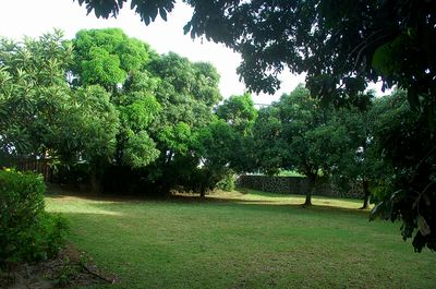 Front part of the property. During the summer season you can also have mangoes.
