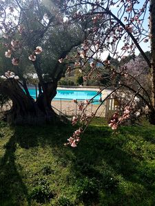 Photo for Provencal Mas with pool 6 people near the sea Le Beausset