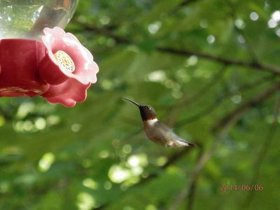 Frequent hummingbird and songbird visits Spring through Fall