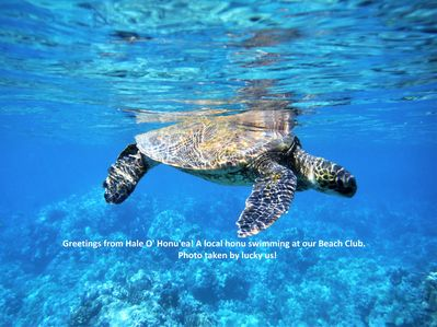 You'll recognize Hale O' Honu'ea by the honu spotted swimming at our beach club!