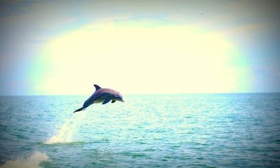 Dolphin watching is a daily activity on St. George Island