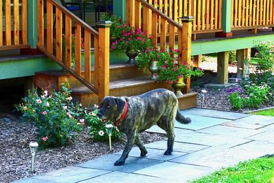 Duke, The Solitude Inn Mascot, making his rounds.