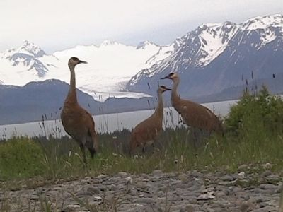 Photo for Glacier View Cabin with Spectacular Views of Grewingk Glacier and Kachemak Bay