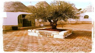 Photo for TRULLI VALLE D'ITRIA THE VINEYARD 10/12 BEDS
