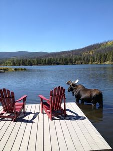 Our daily moose visitor at our private dock