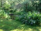 One of two ponds visible from the cottage