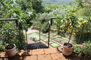 Tufo terrace  with a collection of citrus fruits and steps to wine pergola