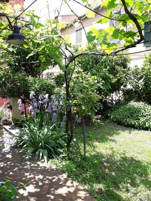 Photo for NAPOLEONE PRIMO Apartment/ flat in the  heart of city of Levanto