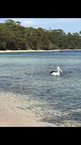 Photo for Beach House @ Plantation Point - Jervis Bay, Vincentia