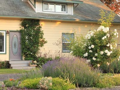 Provence lavender and roses grow abundantly around this property.  June photo.