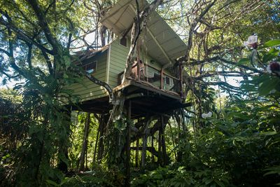 Our home up in the trees!