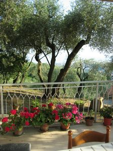 Photo for Apartment in villa with sea view among the olive trees