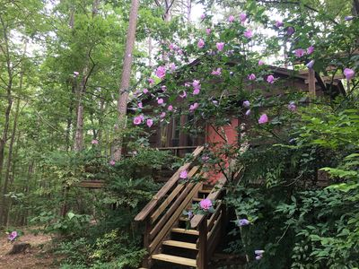 Photo for Tale of the trout cabin located 1 mile from the trout stream and Lake