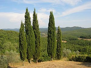 Old Tuscan farm-house, view over the beautiful Mersevalley, ecological pool - Pio