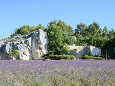 Photo for A haven of peace amid the lavender of Provence