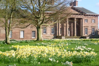 The beautiful daffodils at Paxton House, just five minutes walk away