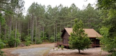 Tall, native pine trees surround the 2 acre property.