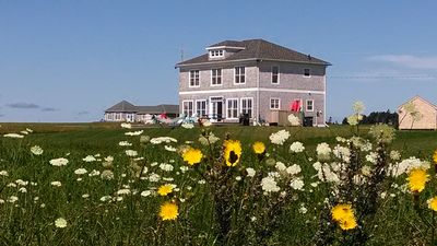 Stunning PEI wildflowers with view of our Beach House