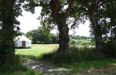 The whole field is for the Yurt - plenty of room to run round & explore