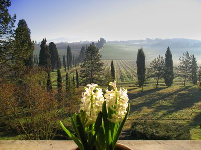 Photo for LA CASALTA- GIRASOLE Apartment - In the green heart of Tuscany