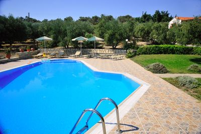 Swimming pool with beautiful olive trees