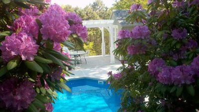 Photo for Lovely 3 Level Cape House With Large Inground Pool And Distant Bay Water View