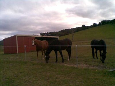 Photo for Towrang Farmstay - located at Goulburn