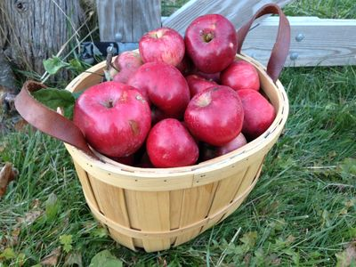 Sweet and  juicy organic apples from our heirloom trees.