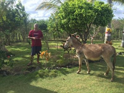 Photo for A Nice Spanish Ranch 5 Minutes from Sanate River and 20 Minutes from Punta Cana